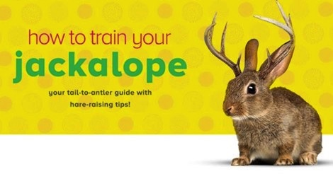 How to Train Your Jackalope