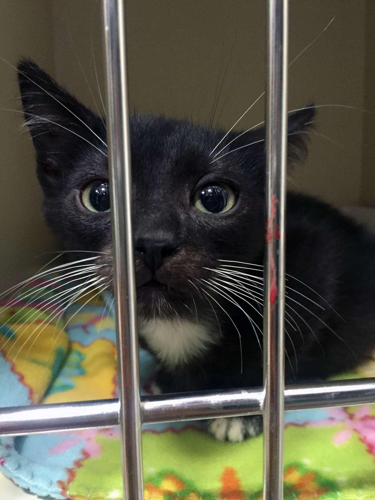 Kitten Rescue LA