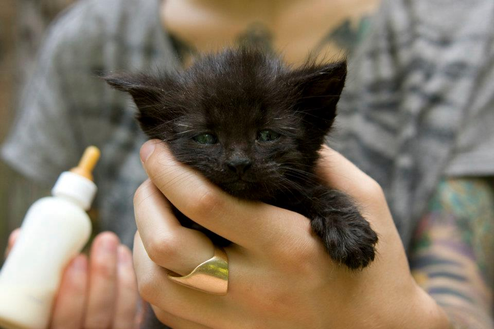 Care for Newborn Kittens by thevetscare.com